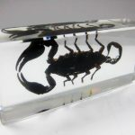 FREE SHIPPING Chinese Specimen Large Black Scorpion in Clear Acrylic Lucite <b>JEWELRY</b> TAXIDERMY GIFT